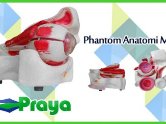 Phantom Anatomi Mata